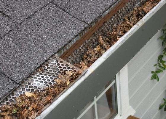 Gutter Inspection - leaves in gutter